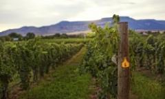 Grand Junction Wine Week