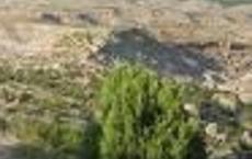 Quad Rocker Trail