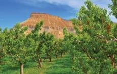 Aloha Organic Fruit