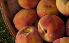 Alidas Fruits