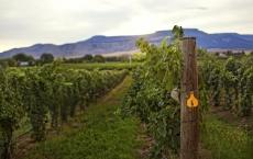 Grand Junction Wine Week