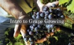 Intro to Grape Growing