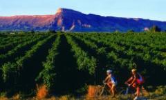 Tour de Vineyards