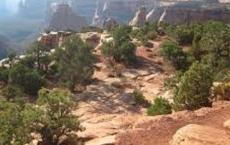 Canyon Rim Trail