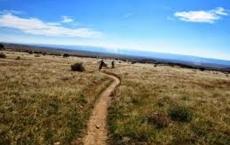Prime Cut Trail