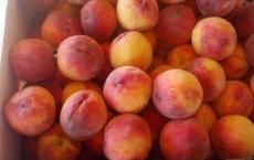 Palisade Peach Company