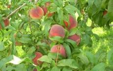 Red Fox Run Orchard