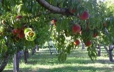 B2 Orchards & Tree Farm