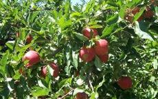 Boltons Orchards & Farm Market