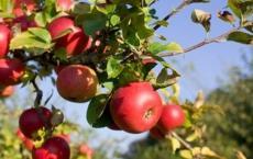 Green Barn Fruit Company