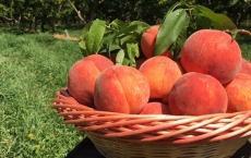 Vista Orchard