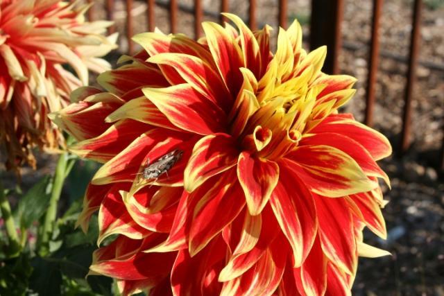 Western Colorado Botanical Gardens Visit Grand Junction Colorado